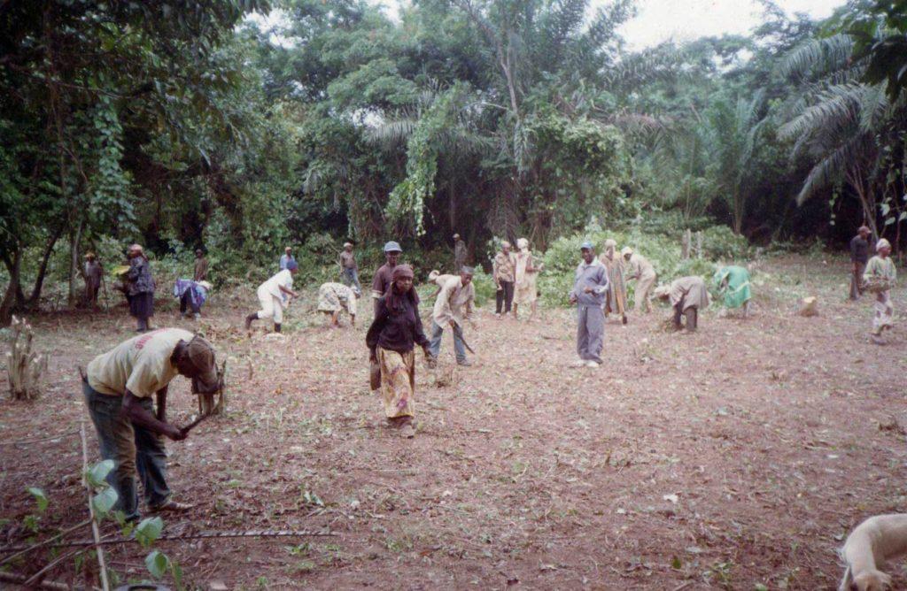 Femmes et Hommes de MAHOLO1 à l'assaut de la forêt vierge pour dégager une place pour l'école.